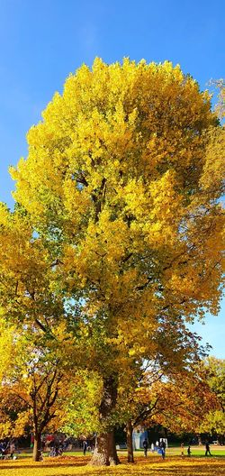 Low angle view of tree in park against sky during autumn