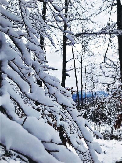 Winter Cold Temperature Snow Nature Tree Weather Beauty In Nature Tranquility Day Scenics Outdoors Branch Frozen No People Tranquil Scene Sky Bare Tree