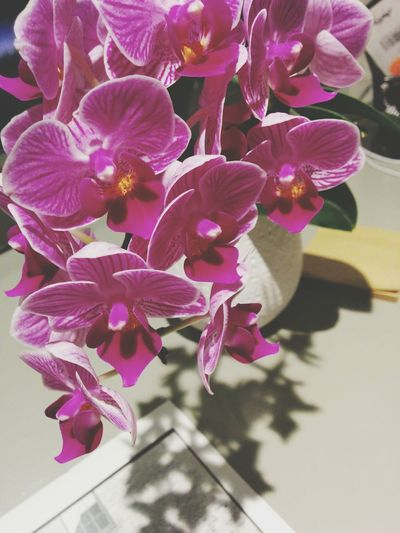 My smelly orchids Taking Photos Enjoying Life Hello World Check This Out
