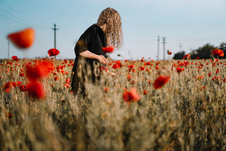 Close-up of young woman picking  red poppy flowers in field during summer