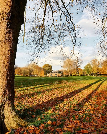 Scenic view of field against sky during autumn