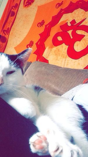 Kittygh] Kitten