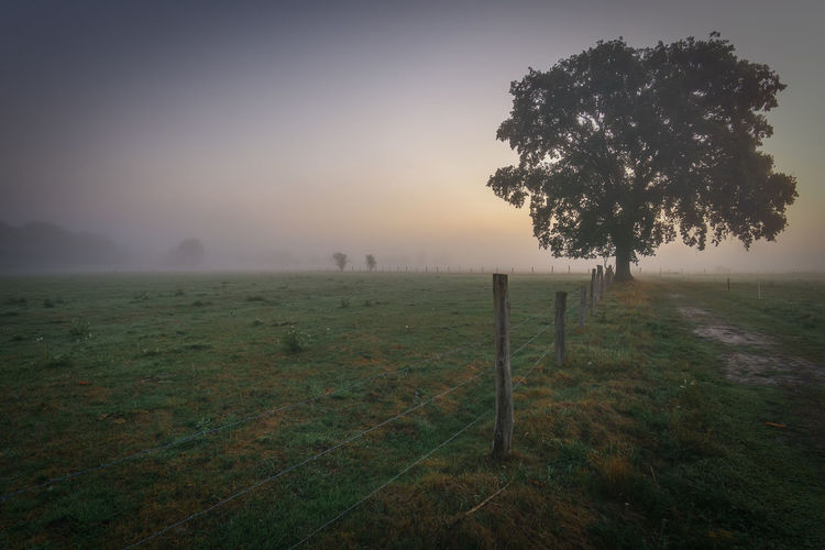 Lonely tree in fog Plant Fog Tree Landscape Tranquility Tranquil Scene Land Environment Field Sky Beauty In Nature Nature Grass Scenics - Nature No People Non-urban Scene Barrier Boundary Fence Outdoors Wooden Post EyeEmNewHere Misty Morning Foggy Morning Field