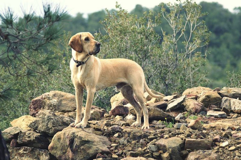Dog standing on rock against trees
