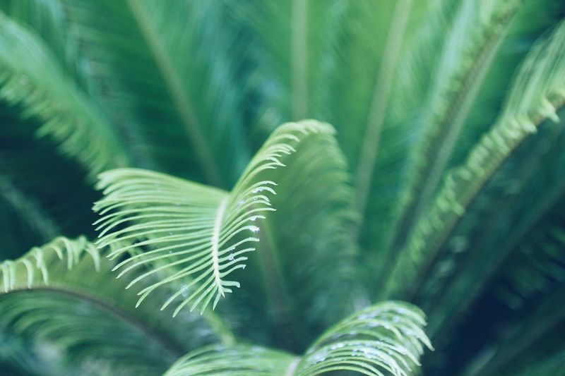 Green Background Green Color Structure And Nature Structures & Lines Structure Backdrop Backgrounds Green Plant Feather Like Green Plants Full Frame Wild Plants Green Color Growth Plant Leaf Beauty In Nature Close-up Plant Part Freshness Focus On Foreground Natural Pattern Selective Focus Botany Fern Vulnerability  Fragility Nature
