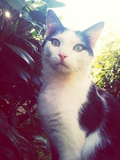 Cat Cute Pet Animal