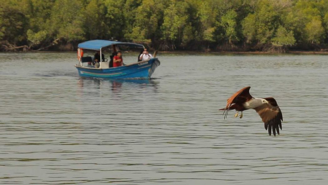 Malaysia langkawi sea eagles feeding Mammal Nautical Vessel River Animal Wildlife Animals In The Wild Tourist Boat Trip Beauty In Nature