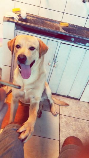 Acho que meu cahorro quer fumar erva comigo ...😐😂 I thing my dog wants to smoke weed with me ...😐😂 Relaxing Roll A Joint Weed Life Weed <3 Smoking Dope Perfect Joint Joint Time Canabis Joint Smoking  Jointime Smoking Session Weed Smoker Smoking Weed Smoke Weed Time Relaxing Time Smoke Weed Marijuana Weed Dog Love