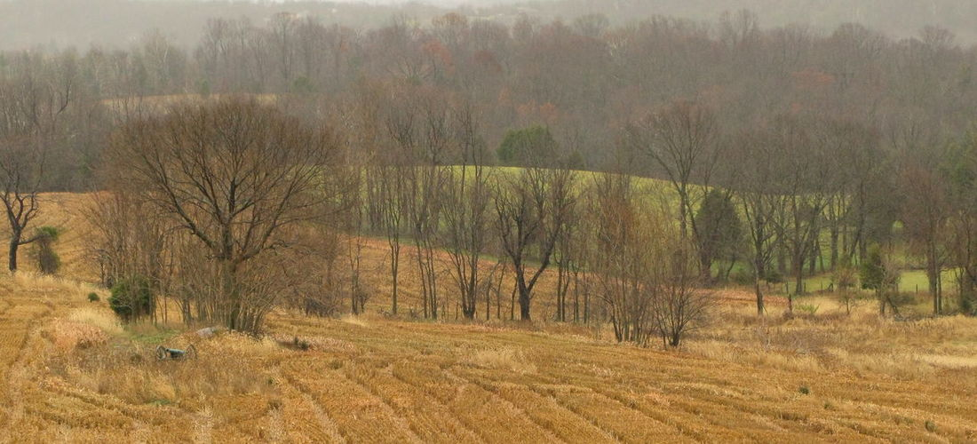 Antietam, Sharpsburg, MD Beauty In Nature Canon Day Field Grass Growth Landscape Lush - Description Nature No People Outdoors Scenics Tranquil Scene Tranquility Tree U.S Civil War