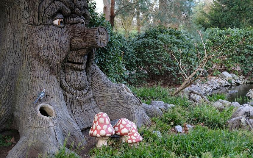Attraction theme park the Efteling, Kaatsheuvel, the Netherlands Plant Representation Tree No People Day Nature Sculpture Art And Craft Statue Growth Land Animal Representation Solid Creativity Outdoors Field Tranquility Close-up Grass Craft