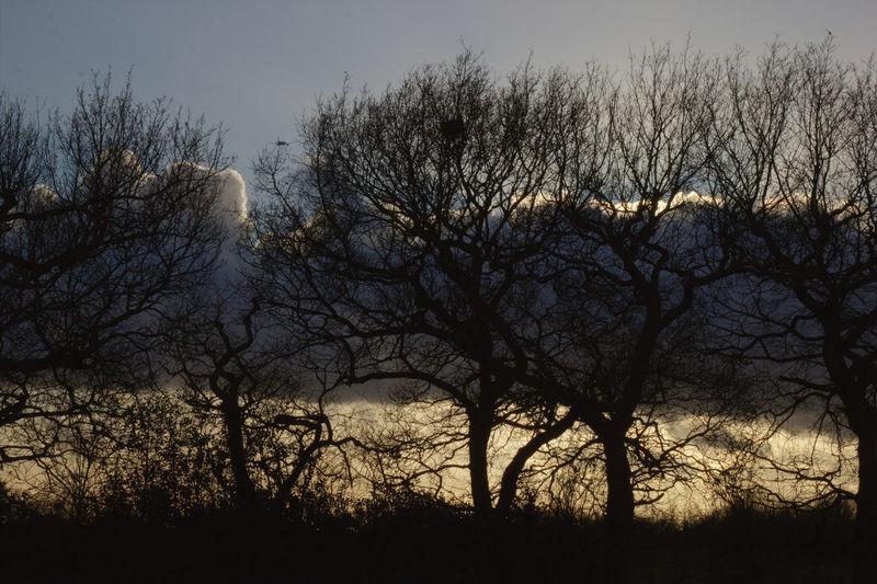 Tree Sunset Silhouette Dusk Sky Close-up Cloud - Sky