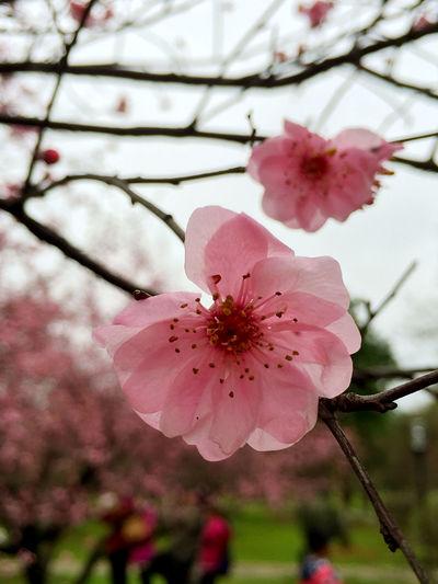 Flowers ??