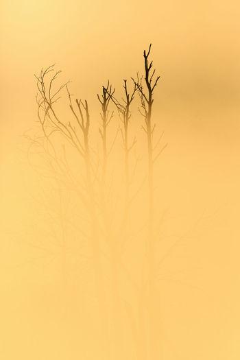 Close-up of silhouette plant against orange sky
