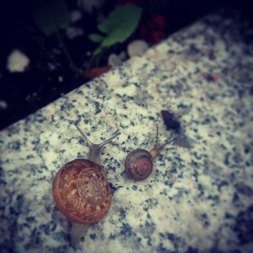 Nature Presentofnature Snails Afterrain naturelovers motherandbaby