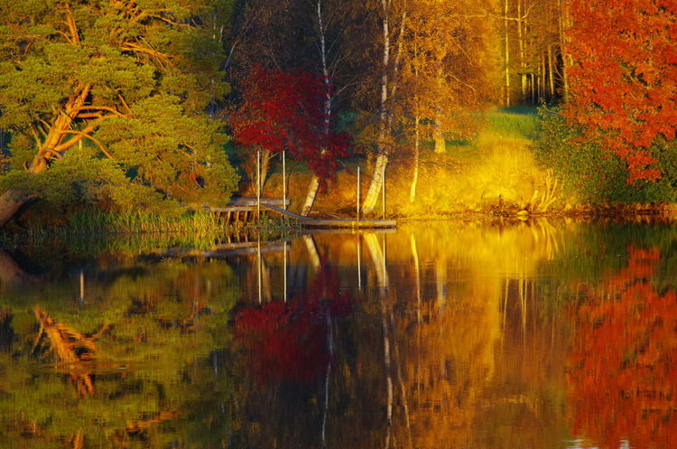 A very nice moment from autumn a couple years ago when i found a scene with every colour and with the sun just above the treeline it gave for a awesome light Reflection Lake Water Nature Sunset_collection Golden Light Scenics Beauty In Nature Tree EyeEm Best Shots - Sunsets + Sunrise Reflection_collection Water Reflections Water_collection EyeEm Best Shots - Landscape EyeEm Best Shots - Reflections Sunsetreflections EyeEm Best Shots - Nature Lightscape EyeEm Best Shots The Week On EyeEm