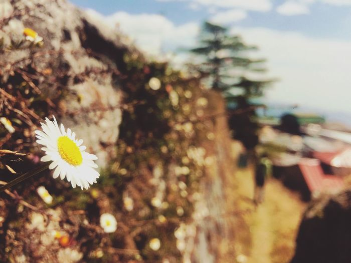 Flower Nature Beauty In Nature Freshness Flower Head Close-up First Eyeem Photo EyeEmNewHere EyeEmNewHere