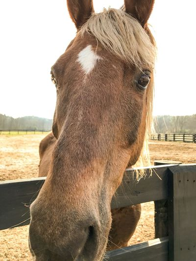 Domestic Animals Horse Animal Themes Livestock Mammal One Animal Ranch No People Day Nature Landscape Close-up Outdoors Sky