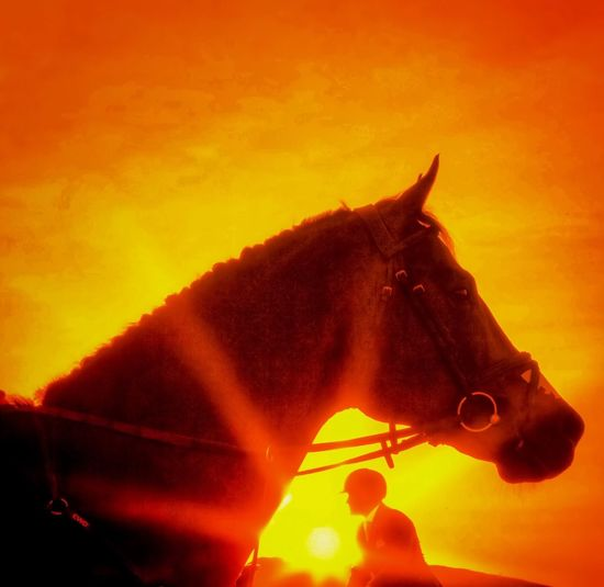 Golden Sunset a photographers delight! Sunbeam Flare Golden Hour Showjumping Equestrian Horses Sunset Orange Color Animal Themes One Animal No People Sky Outdoors Nature Day Close-up