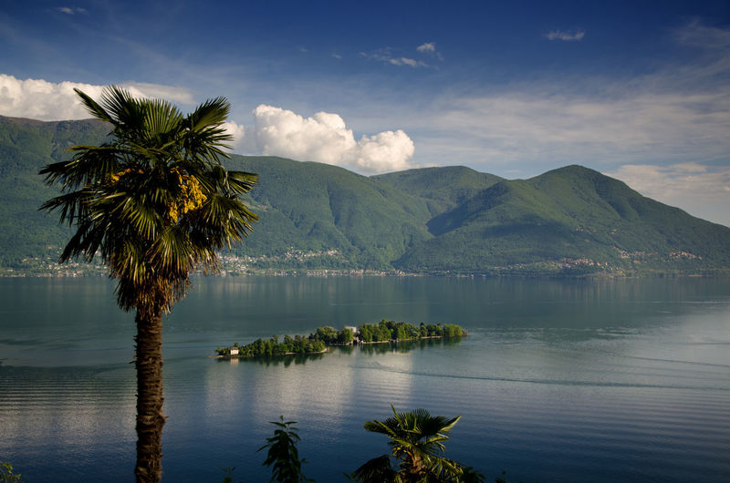 Brissago Islands and palm tree on alpine lake Maggiore in Ticino, Switzerland. Alpine Lake Beauty In Nature Brissago Islands Cloud Day Idyllic Island Lago Maggiore Lake Landscape Majestic Mountain Mountain Range Nature No People Non Urban Scene Outdoors Palm Tree Power In Nature Scenics Sky Blue Swiss Alps Tranquility Travel Destinations Tree
