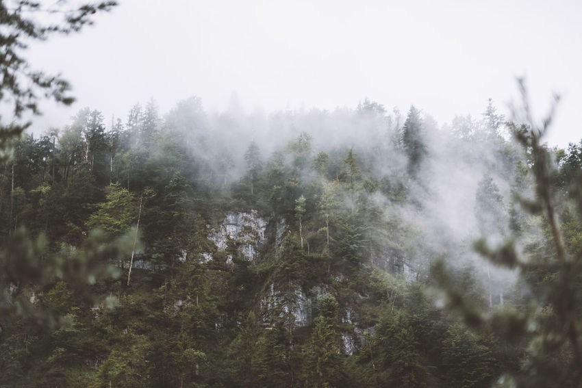 Lost In The Landscape Beauty In Nature Day Fog Forest Growth Landscape Nature No People Outdoors Scenics Sky Tranquil Scene Tranquility Tree
