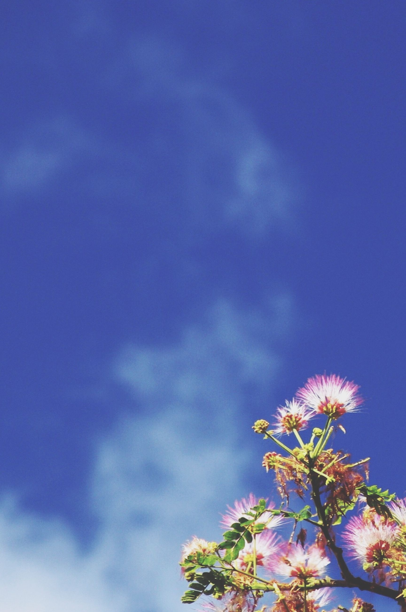 low angle view, growth, sky, blue, beauty in nature, flower, nature, tree, cloud - sky, tranquility, freshness, high section, fragility, outdoors, scenics, no people, branch, day, cloud, plant
