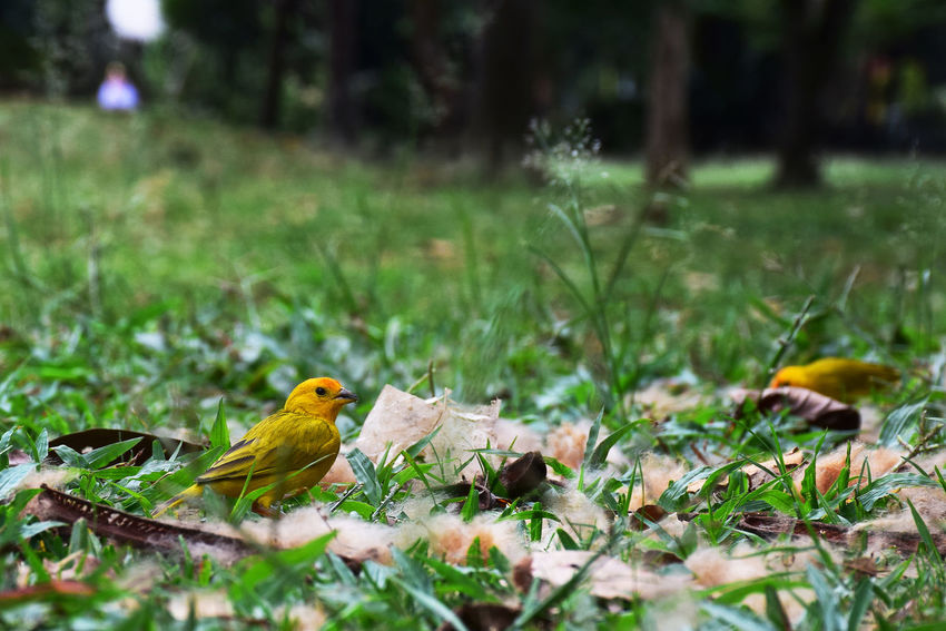 Bird Photography Couple Nikon Animal Themes Animals In The Wild Beauty In Nature Bird Birds D5300 Day Field Flower Forest Forest Photography Grass Growth Nature No People One Animal Outdoors Perching