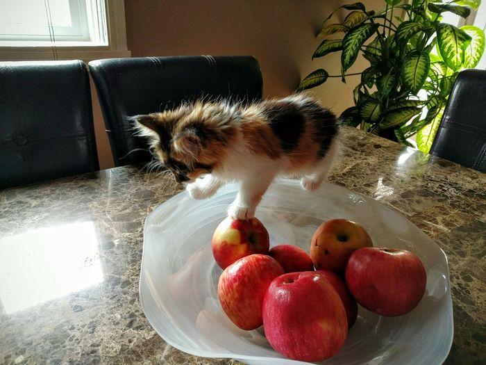 Kitty Cat Kitten Apple Apples Bowl Table Cats Cat On Bowl Cat On Fruit Fruit Fruits Bowl Of Fruit