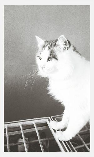 First Eyeem Photo Cute Pets Miao Love ♥