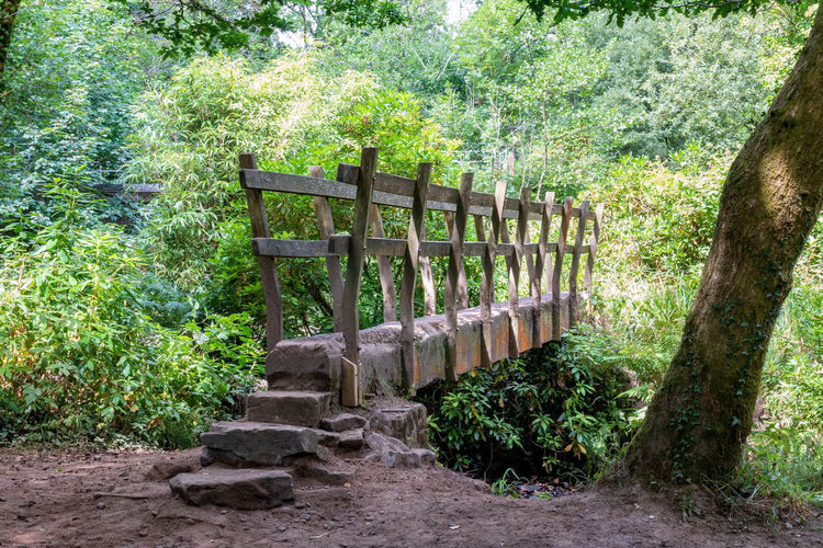 Wooden Bridge Architecture Beauty In Nature Built Structure Day Footpath Forest Green Color Growth Land Nature No People Non-urban Scene Outdoors Penllergare Valley Woods Plant Railing Solid Tranquil Scene Tranquility Tree Wood - Material Wood Bridge WoodLand