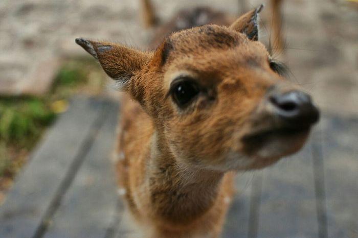 Bambi Farm Granja Capture The Moment