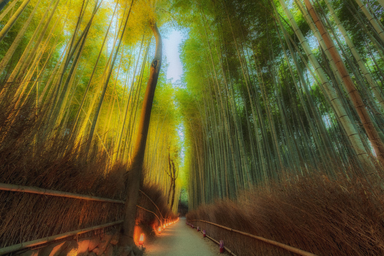 BLURRED MOTION OF BAMBOO TREES IN FOREST