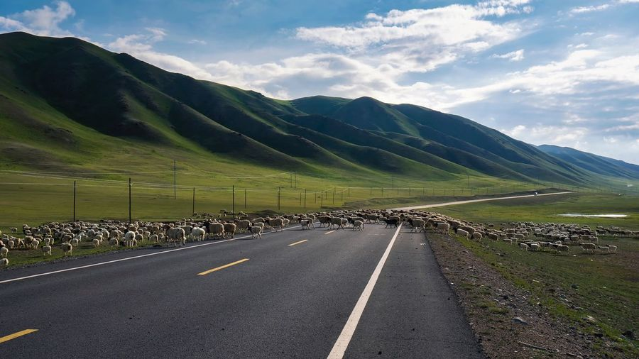 sheep on the road Road The Way Forward Landscape Scenics Sky Mountain Nature Cloud - Sky Day Transportation Tranquil Scene Beauty In Nature Mountain Range Outdoors Tranquility No People Winding Road Travel Destinations The Week On EyeEm Life Cute Beauty In Nature Travel Nature Walking
