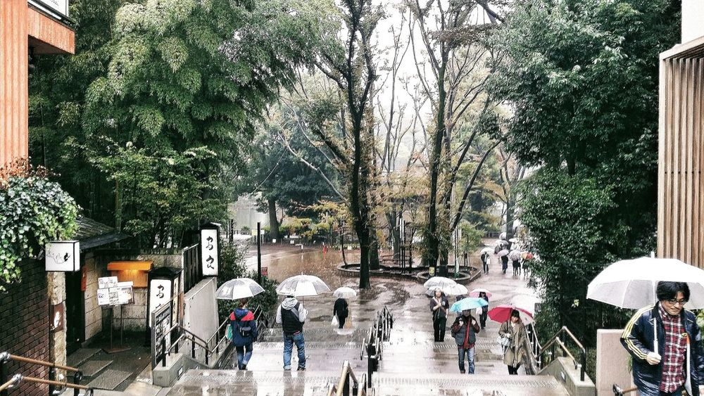Akiko brought us to Inokashira Park. There's a Zoo in here and Ghibli Museum too. This was my third park this Rainy Day. Raining Cats And Dogs Tokyo Japan Park Friends Travel Photography