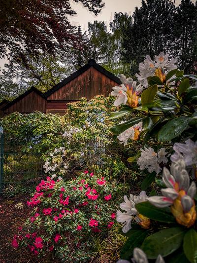 Pink flowering plants in yard
