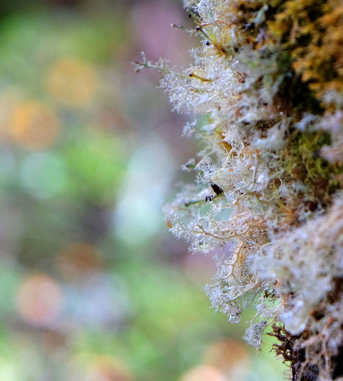 Close-up Focus On Foreground Selective Focus Beauty In Nature Nature Plant Growth No People Outdoors Tree Fragility Fungus Lichen