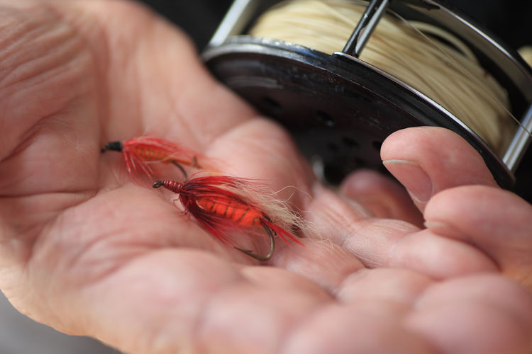 Man holds artificial fishing flies Artificial Flies Closeup Details DIY Fingers Fish Hooks Fisherman Fishing Line Fly Fishing Reel Hand Hand-tied Flies Holding Indoors  Man Natural Light Open Palm Palm Up Red Textures