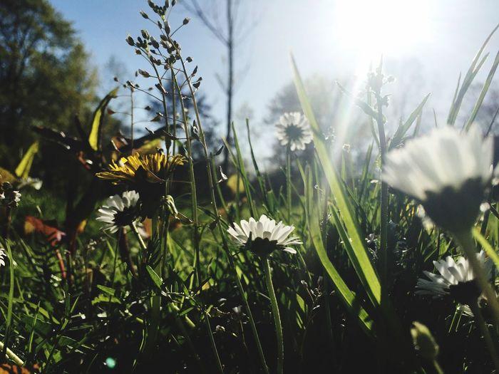 Low Angel View Of Flowers Blooming In Park