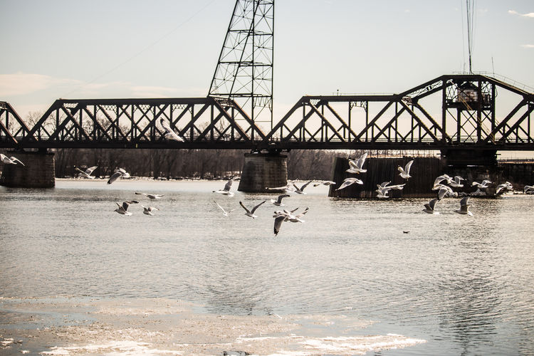 View of birds on bridge over river