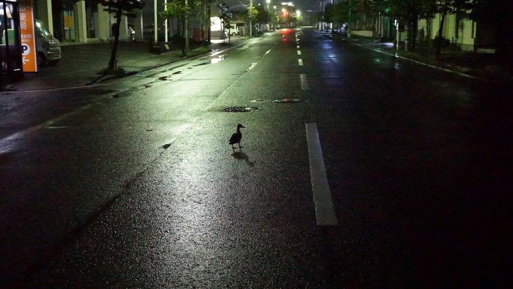 飲んだ帰りは お写んぽ タイム… かも … Nightphotography Streetphotography Light And Shadow Eye4photography  Japan Photography 今日はそんなに酔ってない