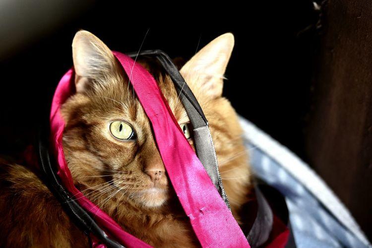 Cat & Ribbon.