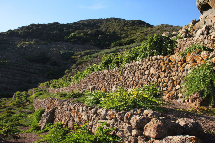 Pantelleria Caper Field Day Landscape Nature No People October 2015 Outdoors Rock - Object Sky Stone Walls Tranquil Scene