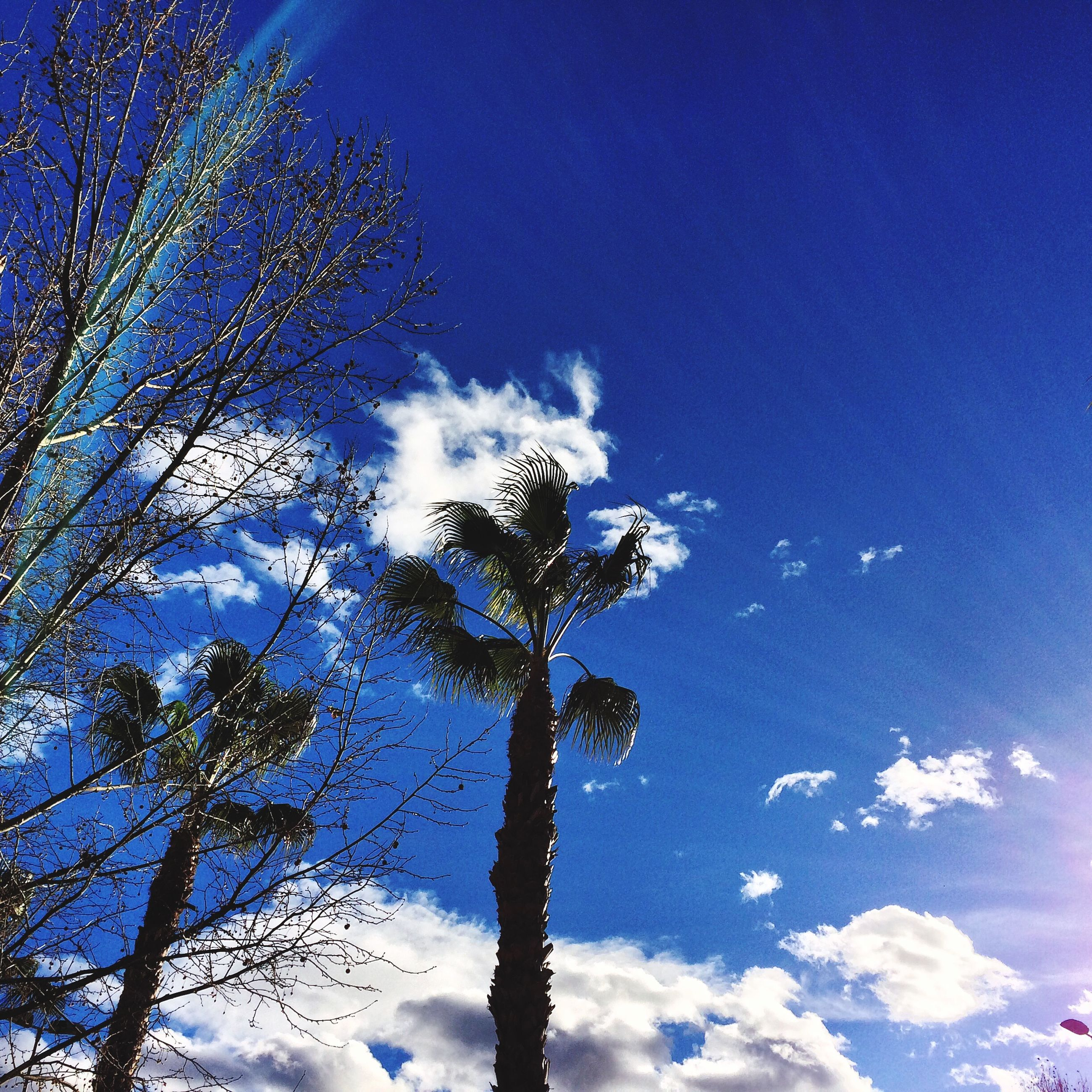 low angle view, tree, blue, sky, beauty in nature, nature, tranquility, sun, branch, sunlight, growth, sunbeam, clear sky, scenics, silhouette, lens flare, outdoors, day, no people, tranquil scene