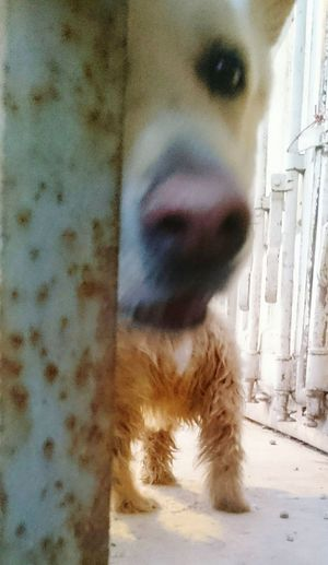 Dogs Funny Dogstyle Body Part HEAD