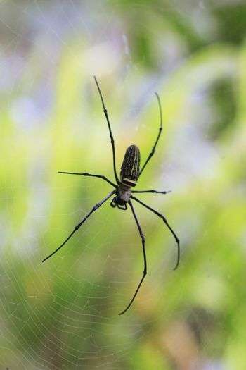 Animal Animal Body Part Animal Leg Animal Themes Animal Wildlife Animals In The Wild Arachnid Arthropod Close-up Day Focus On Foreground Fragility Green Color Insect Invertebrate Nature No People One Animal Outdoors Selective Focus Spider Spider Web Web