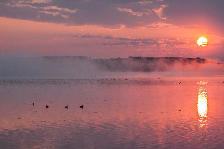 Animal Themes Animal Wildlife Animals In The Wild Beauty In Nature Bird Day Fog Foggy Foggy Morning Idyllic Lake Nature No People Outdoors Reflection Scenics Sky Sun Sunset Swimming Tranquil Scene Tranquility Water