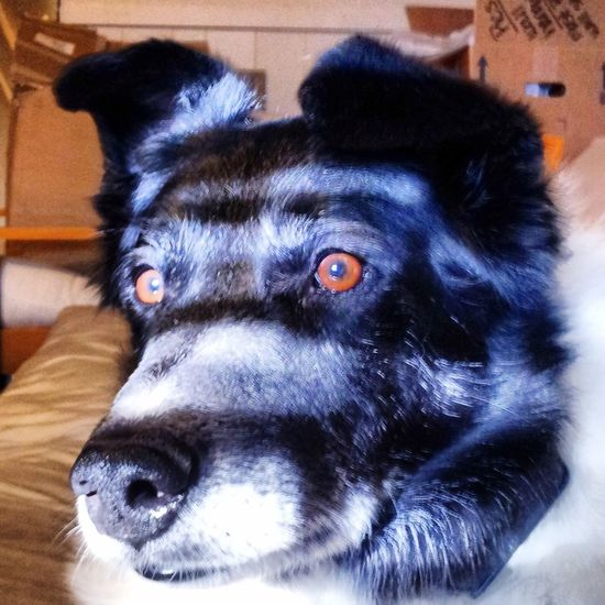 One Animal Dog Portrait Dogslife Lovedogs
