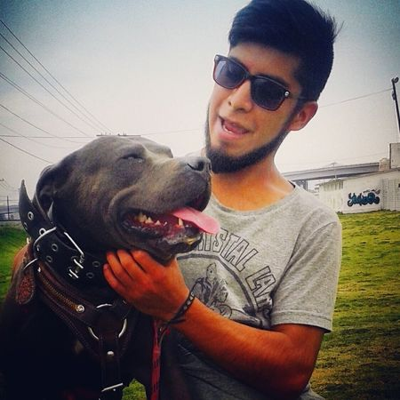 Dog❤ Satan 666 Baby Dog Paseo Pitbull Pitbull Blue Happy Dog Happy Plaza Las Americas Ecatepec México.