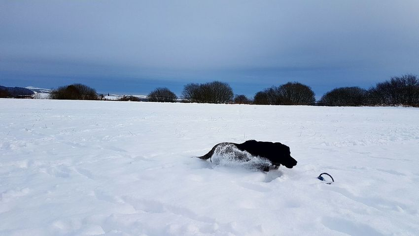 action shot of ollie Dog Snow Animals In The Wild Cold Temperature Animal Themes One Animal Winter