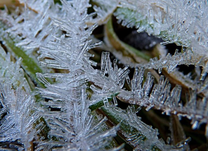 Beauty In Nature Branch Close-up Cold Temperature Day Fragility Frozen Ice Ice Crystal Makro Makro Photography Maximum Closeness Nature Needle - Plant Part No People Outdoors Snow Tree Weather Winter