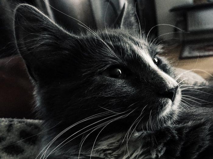 ❤️ Relaxing Sweden Kitten Cat